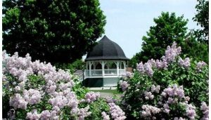Rochester Common- lilacsgazebo